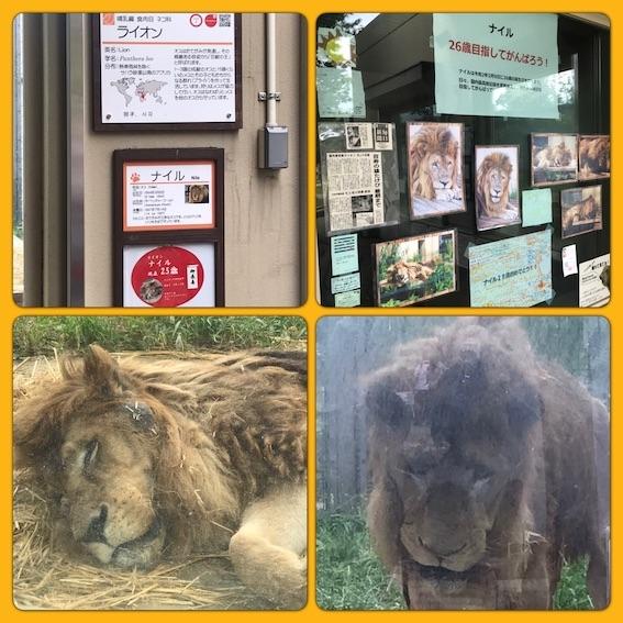 2019動物園
