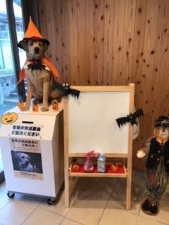 盲導犬協会2