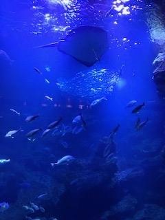 水族館20202